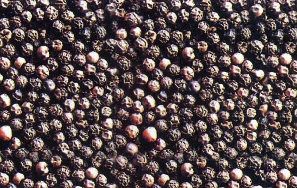Vietnam black pepper purchased directly from farmers, best price