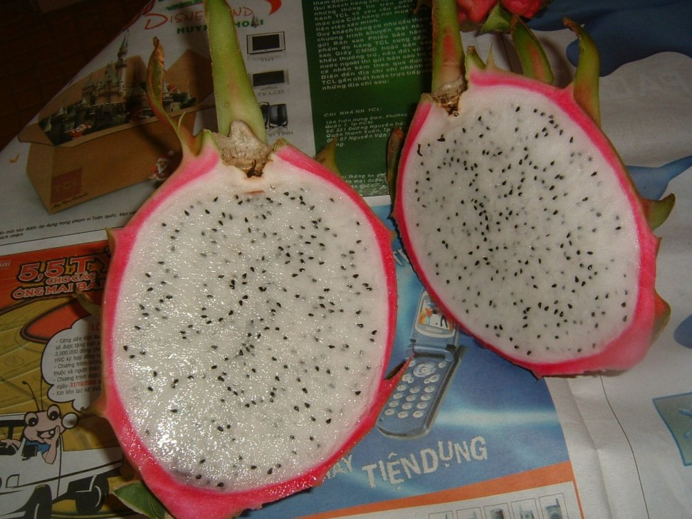 Mua Dragon Fruit