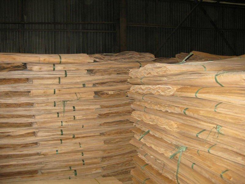 Mua Eucalyptus core veneers