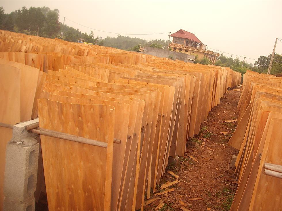 Mua Acacia core veneer