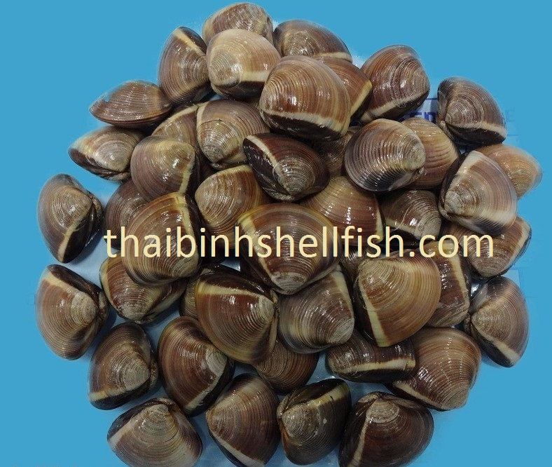 Mua FROZEN COOKED WHOLE BROWN CLAM SHELL ON