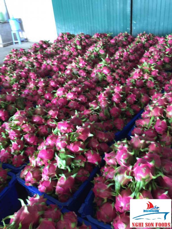 Mua Best Price Fresh Dragon Fruit White and Red Flesh From Vietnam