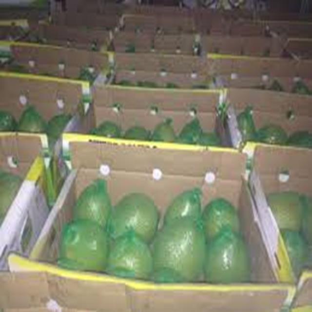 Buy Best green grapefruit Vietnam
