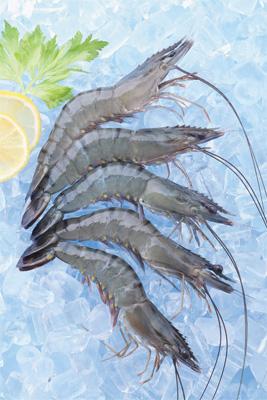 Mua Black Tiger Shrimp Head On Shell On