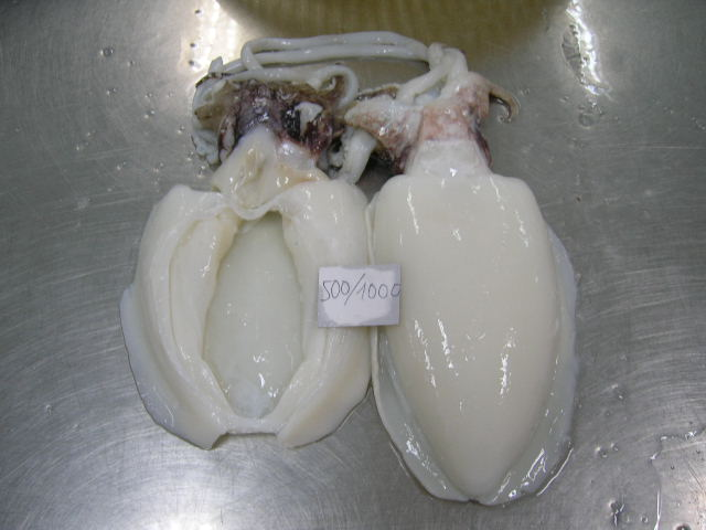 Mua Cuttlefish
