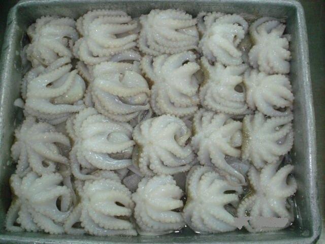 Mua Frozen Baby Octopus Size