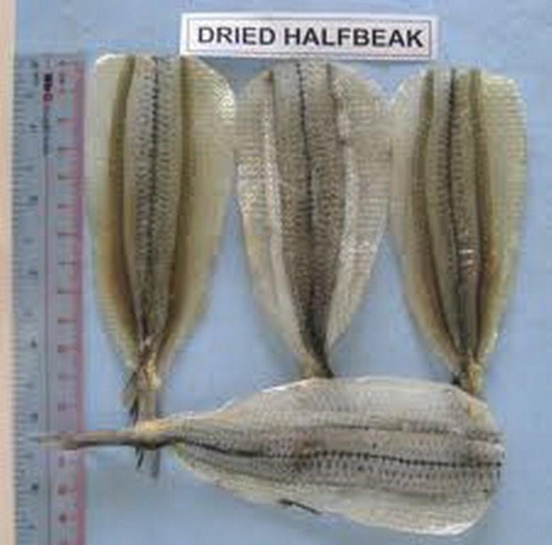 Mua Dried needle fish (Halfbeak)