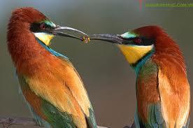 Mua Thức ăn cho chim