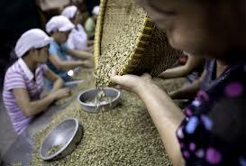 Mua Robusta green coffee bean(Vietnam)