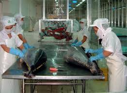 Mua Cá ngừ tươi