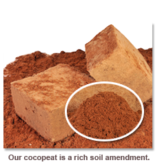 Mua Cocovina's Coconut Peat