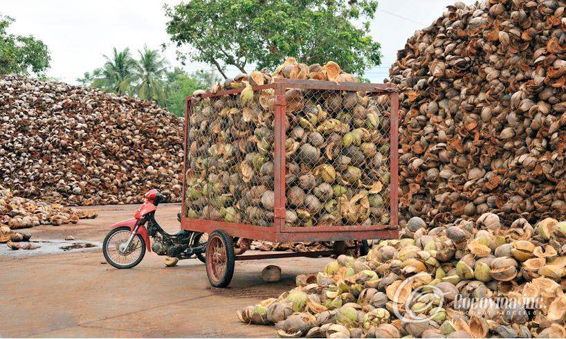 Mua Coconut Coir Fiber