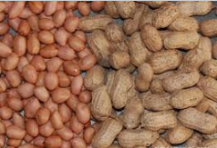 Mua North Vietnam Groundnut Kernel
