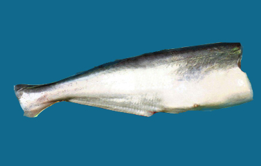 Mua Cá tra nguyên con cắt đầu