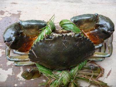 Mua Live mud crab