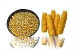 Mua Bắp hạt vàng