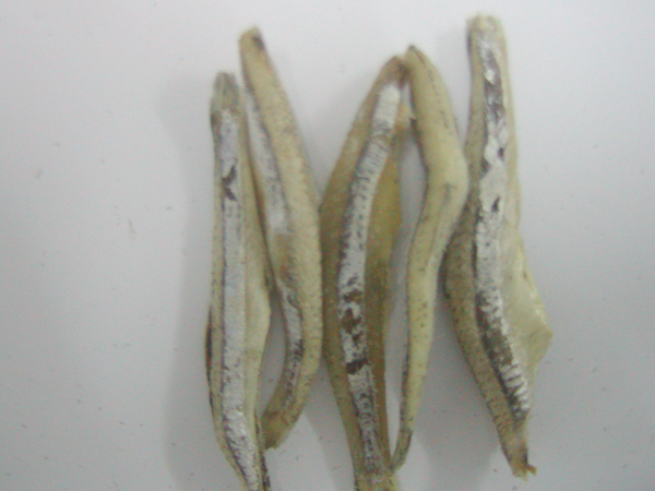 Dried Salted Anchovy Headless
