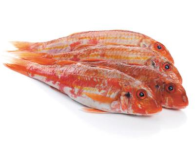 Red Mullet Whole Round Gutted