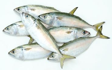 Mua Indian mackerel