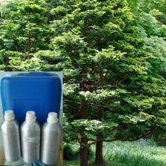 Spruce essential oil