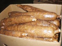Fresh cassava with skin