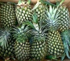Pineapple fresh fruit
