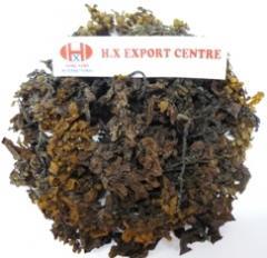 Dried seaweed Sargassum