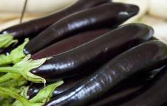 Purple eggplant fresh fruit
