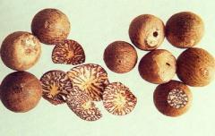 DRIED BETEL (ARECA) NUTS