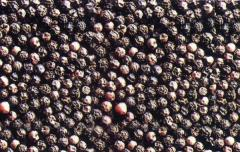 Vietnam black pepper purchased directly from