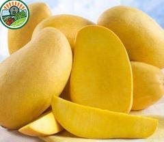 FrozenMango Haft Cut 100% Natural