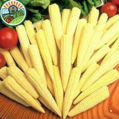 Frozen Baby Corn According High Teachnology