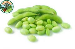 Frozen Green Soybean Cut Slice 100% Natural With High Quality