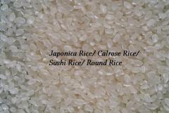 ROUND GRAIN RICE/ JAPONICA RICE/ CALROSE RICE/