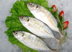 Indian Mackerel (Cá bạc má/ Cá thu ấn)