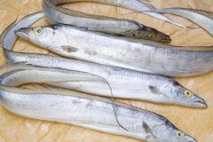 Ribbon Fish (Cá Hố)