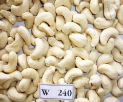 Vietnam Raw Cashew w240