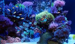 Сá cảnh nhiệt đới, cá biển, cá nước ngọt, động vật không xương sống biển, trai và san hô