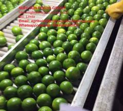 LIME HIGH QUALITY GOOD PRICE