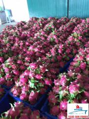Best Price Fresh Dragon Fruit White and Red Flesh From Vietnam