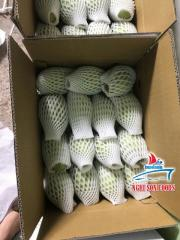 FRESH MANGO ORIGIN VIETNAM HIGH QUALITY