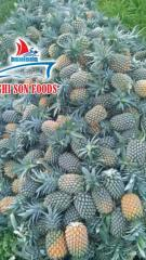 PINEAPPLE WHATSAPP +84986365621