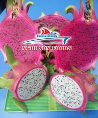Fresh Red Flesh Dragon Fruit in Vietnam