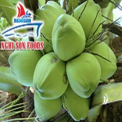 Fresh Coconut Supplier in Vietnam