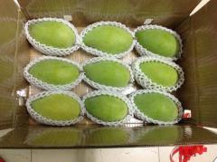 Fresh Mango Supplier in Vietnam High Quality