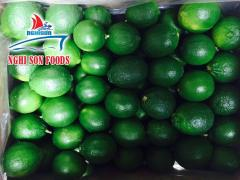 Fresh Seedless Lime Supplier in Vietnam High Quality
