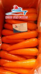 Fresh Carrot in Vietnam High Quality