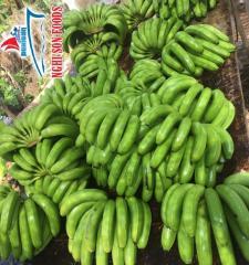 Fresh Cavendish Banana from Vietnam Supplier in Bulk
