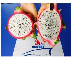 Fresh White-Flesh Dragon Fruit from Vietnam Supplier in Bulk