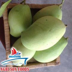 Fresh Catchu Mango from Vietnam Supplier in Bulk